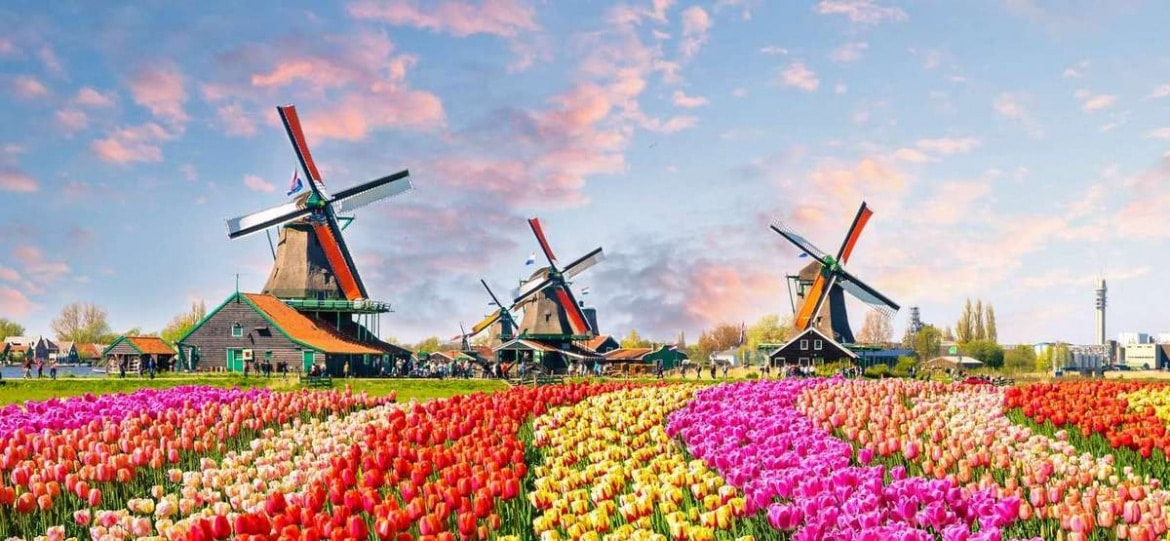 Mills and tulips in the Netherlands