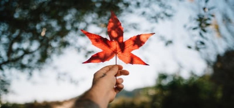 main-qui-tient-une-feuille-d-arbre